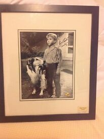 John provost Timmy with lassie signed with. Coa
