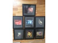 framed underwater pictures