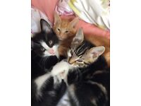 Gorgeous kittens for loving homes