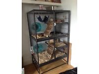 3 male Degu's with complete set-up