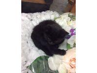 Kitten 9 weaks old