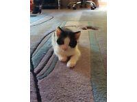 3 lovely fluffy kittens for sale :-)