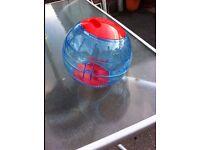 Syrian hamster ball