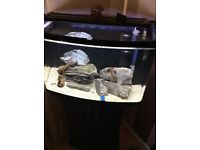 Interpet 60 litre fish tank