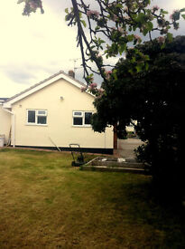 Single room to let Christchurch