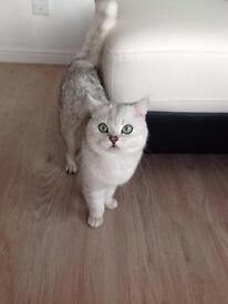 Pet cat sitter boarder carer available
