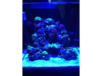Redsea e170 reefer with fish and rocks and Corel s