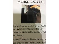 Lost black cat - Thornton Ave, Redhill, Nottingham, last seen Nov 22nd .