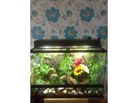 Vivarium swap for fish tank and base