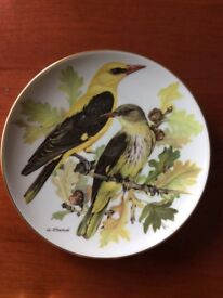 'Golden Oriole' - A lovely Porcelain Plate in the Songbirds of Europe series by Ursula Band