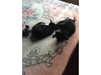 Kittens for free + Mother