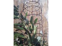 Botanico Expanding Spiral Plant Support
