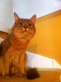 Cat missing - Kilmarnock