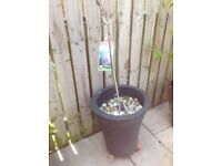 17 various potted plants including jasmin, clematis, black current, blueberry, wysteria etc