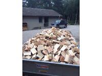 Firewood (LARGE AMOUNT)