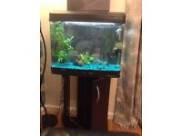 Fish tank 90 litres and base. Must sell.