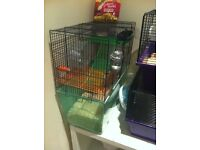 2 gerbils free to a good home Free cages sawdust, food and accessories