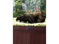 Jewel Tropical Fishtank For Sale