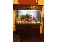 Very nice large aquarium in an attractive cabinet