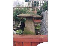 Garden concrete mushroom