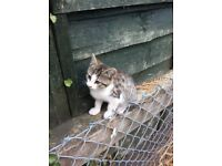 Four 11 week old kittens for sale