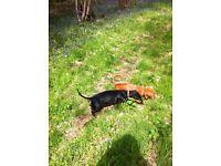 Dog walker Oxford