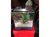 Fish tank tropical 18L cube