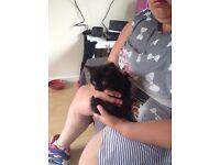 5 8 week old lovely kittens