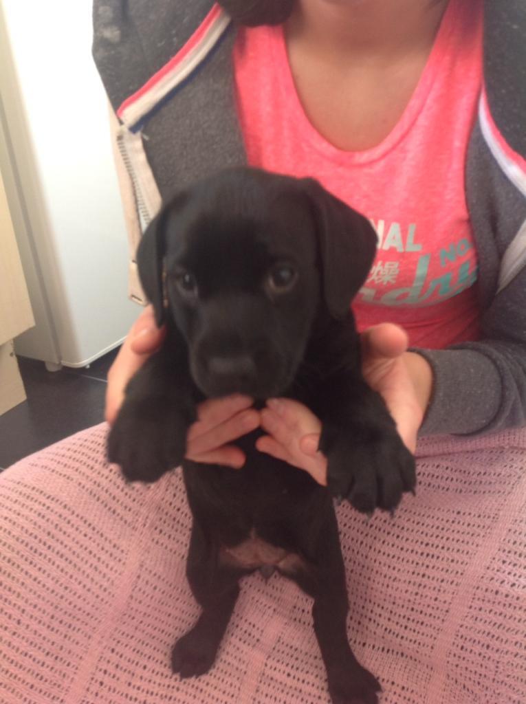 Dog Free To Good Home Ayrshire