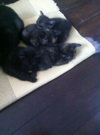Kittens ready for sale