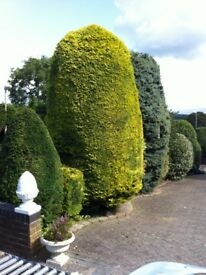 S.A. Gardening Servicers Regular lawn mowing, strimming, hedge and tree cutting