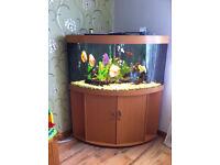 Juvel Trigon 350 complete set up aquarium