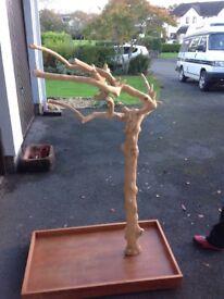 Java coffee tree wood large parrot tree stand