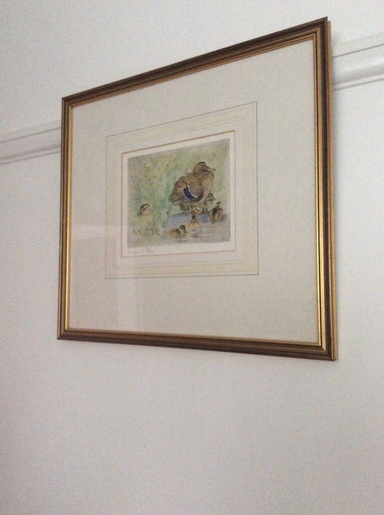 Mallard by Peter Partington - Limited edition dry point etching