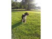 Michelles dog walking boarding pet sitting services Chorlton Didsbury