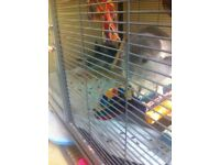 Two chinchillas with high quality cage. Very loveable pets