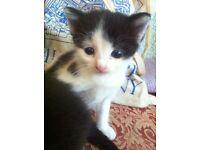 Beautiful black and white kittens ���💕