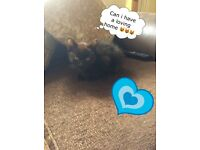 3 Beautiful Black Kittens