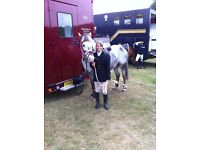 True Allrounder for sale! Berry is a lively appaloosa sized at 13.2hh