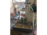 7 finches & cage