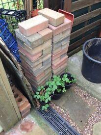Block pavers for edging pathway
