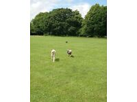 Dog Walkers - South Manchester and Cheshire