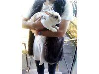 Rabbitt bunny for sale