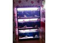 Fish tank rack system 4ft