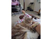 MISSING/LOST CAT - FLEXO