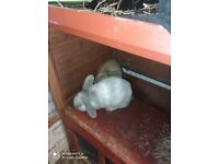 2 1 year old rabbits, double cage, haye pellets straw and water bottles