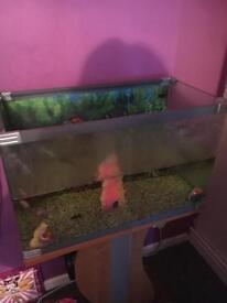 60L Fish Tank