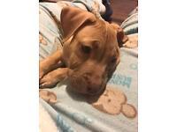 Puppy 11 weeks