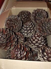 Pinecones, large/ex-large/various sizes.
