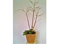 Artificial Indoor Plant in Wicker Basket with Moss Bed; 3 Branches & Base Plant; appx 1.3m (h)